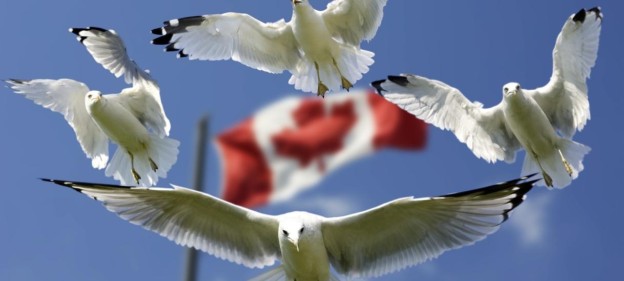 Handelsabkommen CETA: DIE LINKE mit Klage gegen Bundestaggescheitert